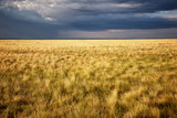 Great Kazakh steppe, Kazakhstan, Central Asia