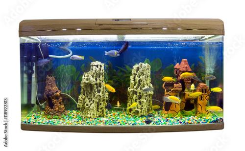 Spoed Foto op Canvas Oceanië Beautiful semi-circular aquarium with tropical fish on a white background