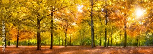 Canvas Prints Honey Herbst Wald Panorama im Sonnenschein