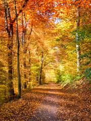 Fototapeta Lichtdurchfluteter Waldweg im Herbst