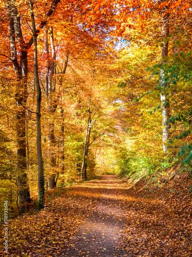 Tuinposter Oranje eclat Lichtdurchfluteter Waldweg im Herbst