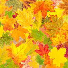 Naklejka na ściany i meble Autumn background