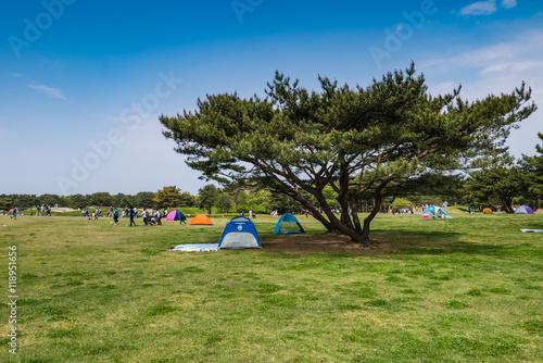Canvas Prints Camping Hitachi Seaside Park