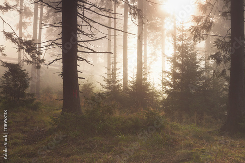 Fotografie, Tablou  Beautiful landscape of a foggy forest, at sunrise