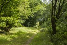 Liten Skogsväg Genom Solbelyst Lövskog