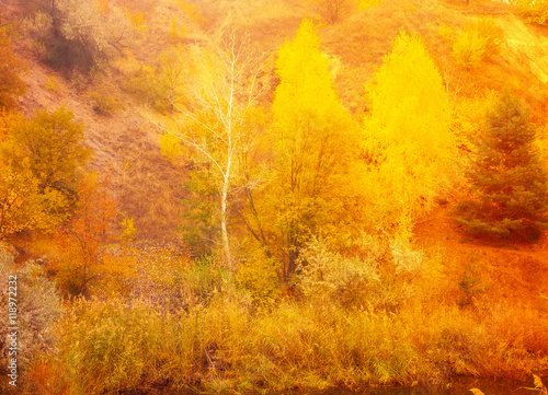 Photo Stands Roe Beautiful autumnal scene, fall