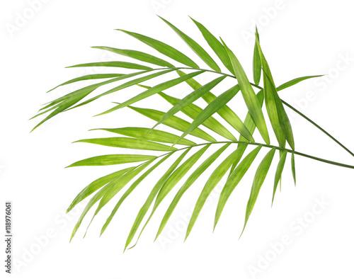 Foto auf Gartenposter Palms Green leaves of palm tree on white background
