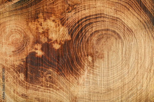 Fotografía  Tree trunk cross section, closeup