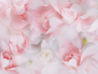 Fototapetasweet pastel flowers background
