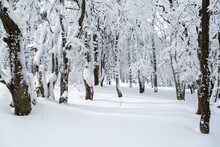 Trees In The Forest Covered Wi...