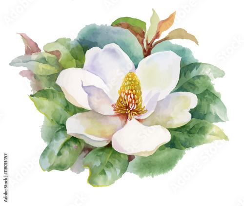akwarela-lato-kwitnacy-bialy-kwiat-magnolii