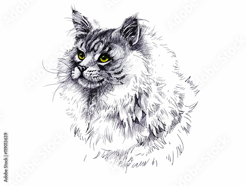 Poster Croquis dessinés à la main des animaux black and white longhair cat ink hand drawn illustration.