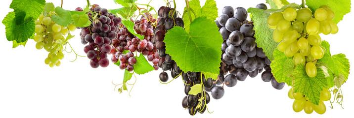 Fototapetagrappes de raisins et feuilles de vigne, fond blanc