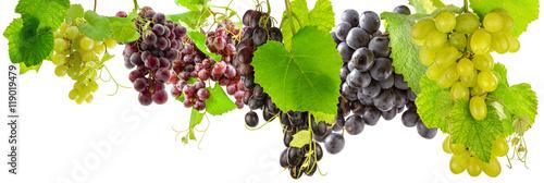 Fotografia, Obraz  grappes de raisins et feuilles de vigne, fond blanc