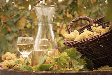 Fototapeta Wino white wine vineyard autumn season