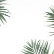 Leinwanddruck Bild - palm branches isolated on white background. flat lay, top view