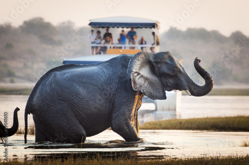 Fotomural  Tourists watching an elephant crossing a river in the Chobe National Park in Bot