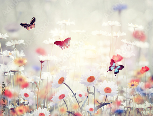 wild flowers in a meadow Wallpaper Mural