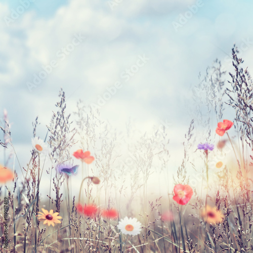 Fototapeta Field with wild flowers