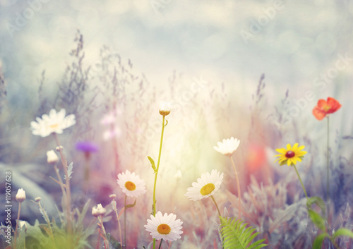 Foto  Field with wild flowers