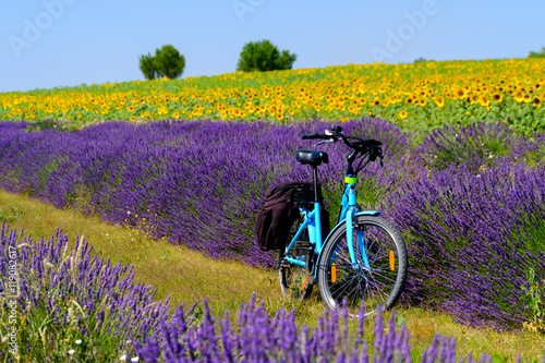 Aluminium Prints Bicycle Electric bicycle in the lavender and sunflower field in Provence, France
