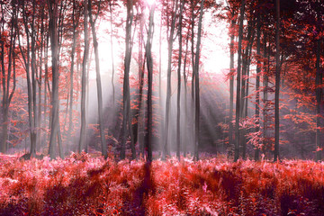Obraz na Szkle Las Red forest abstraction