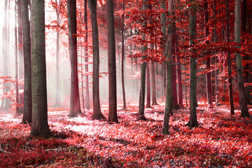 Fototapeta Do salonu Red forest abstraction