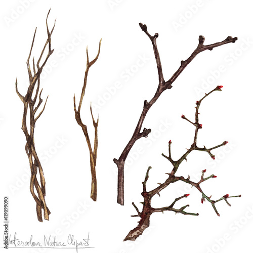 Photo sur Aluminium Illustration Aquarelle Watercolor Nature Clipart - Twigs