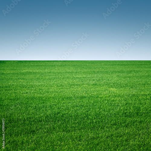 Montage in der Fensternische Gras grass field minimalistic