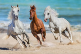 Fototapeta Konie - Horse herd run gallop on seashore