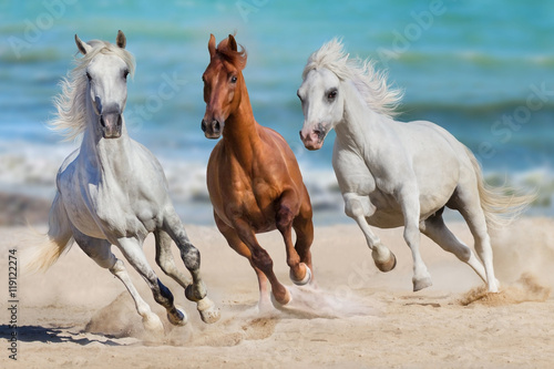 Horse herd run gallop on seashore