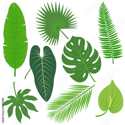 Foto  Tropical plant leaves vector collection.
