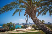 Park In Tel-Aviv
