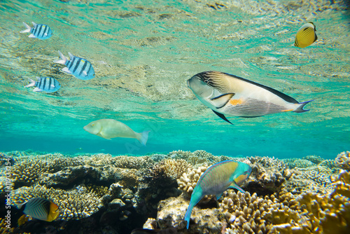 Poster Coral reefs coral reef of the red sea