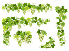 Set Of Bunches Of White Grapes...