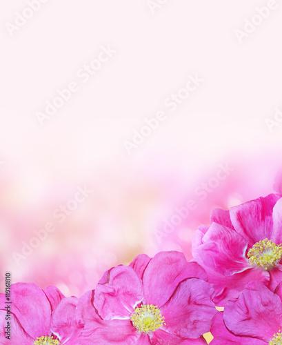 Poster Fleur Delicate wild rose garden flowers