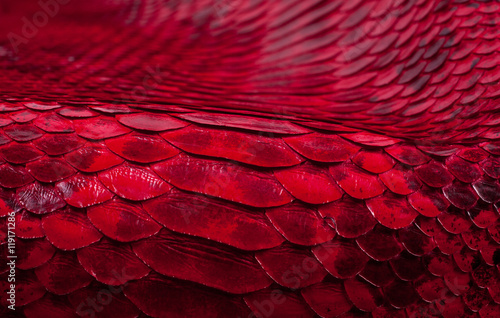 Fotomural Python snakeskin leather background, snake skin, texture, animal, reptile