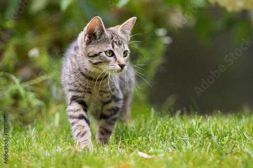 Foto op Plexiglas Kat Getigertes Kätzchen