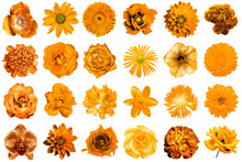 Mix Collage Of Natural And Surreal Orange Flowers 24 In 1