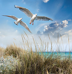 FototapetaAuszeit, Ruhe, Meditation, Entspannung: Strand mit Möwe :)