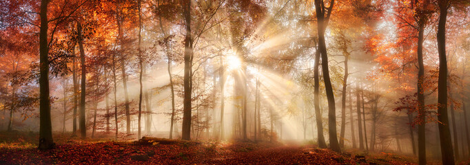 Panel Szklany Podświetlane Panorama Besondere Lichtstimmung in einem nebligen Wald im Herbst, Panorama Format
