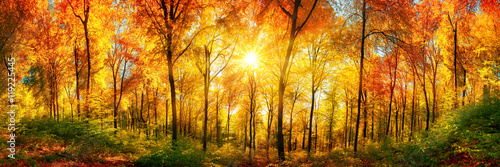 Canvas Prints Honey Wald Panorama mit Sonne an einem schönen Tag im Herbst