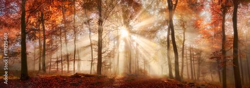 Specjalny lekki nastrój w mglistym lesie jesienią, panoramiczny format