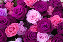 Different Colors Of Roses On T...