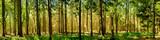 Fototapeta Las - Wald Panorama bei Sonnenschein