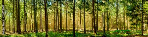 Poster Forets Wald Panorama bei Sonnenschein