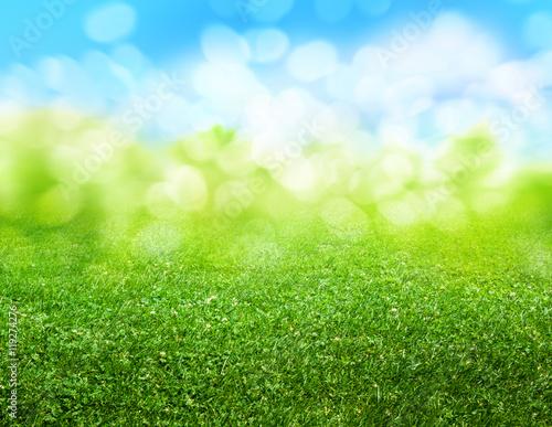 Garden Poster Spring green grass blurred background