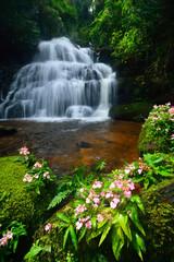 Fototapeta Storczyki Mandang waterfall