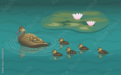 Slika na platnu Wild duck with ducklings/ Mallard hen swimming near the lily pads with her brood
