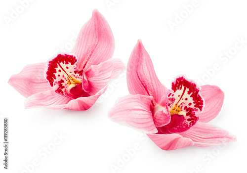 Foto auf Leinwand Orchideen Orchid flowers